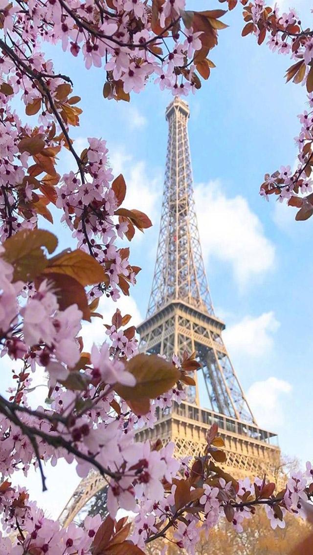 巴黎铁塔 樱花 唯美风景