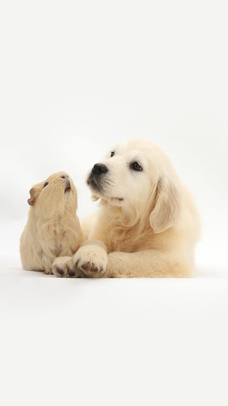 可爱动物高清手机壁纸图片_皮皮网