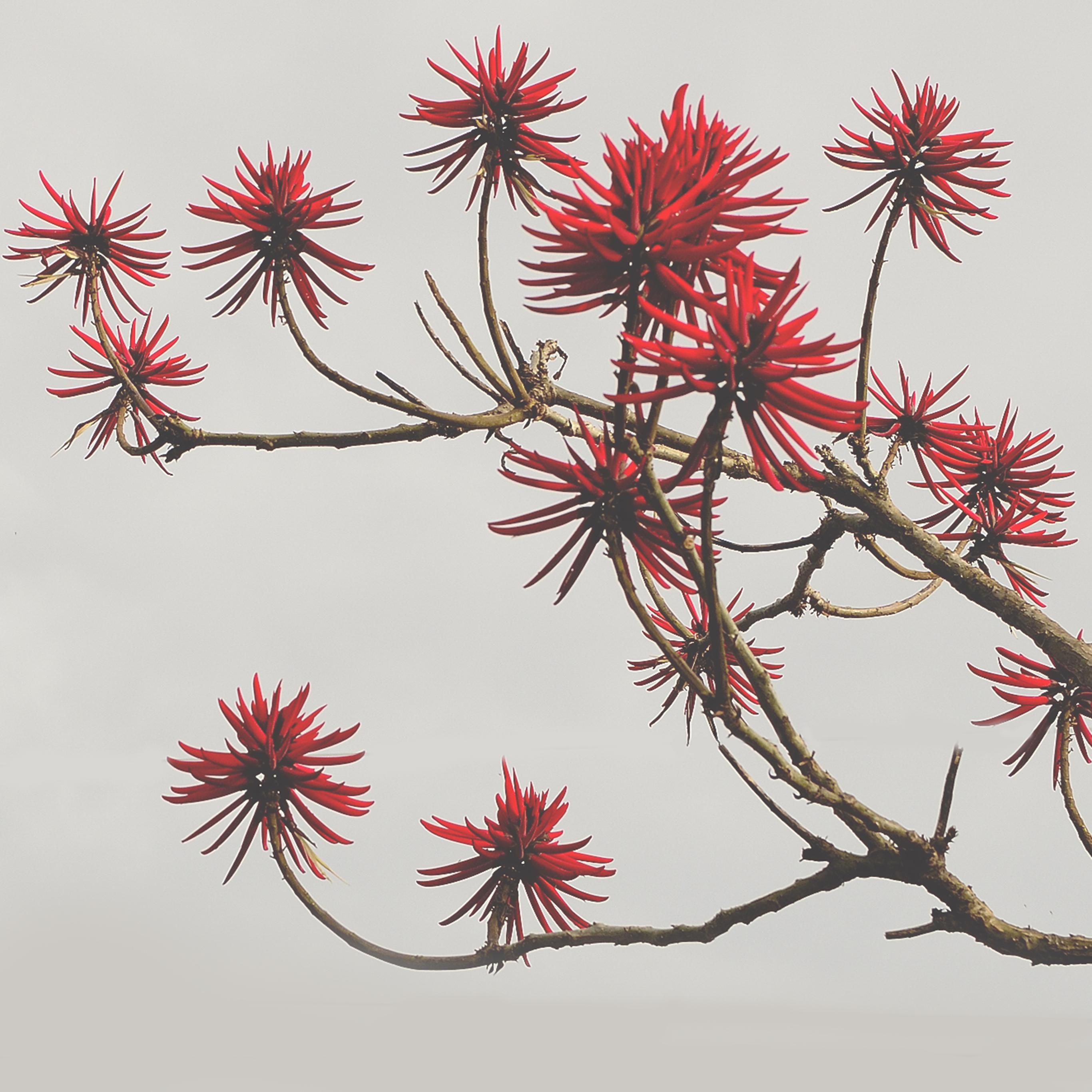 天空 树 枝头上的红花