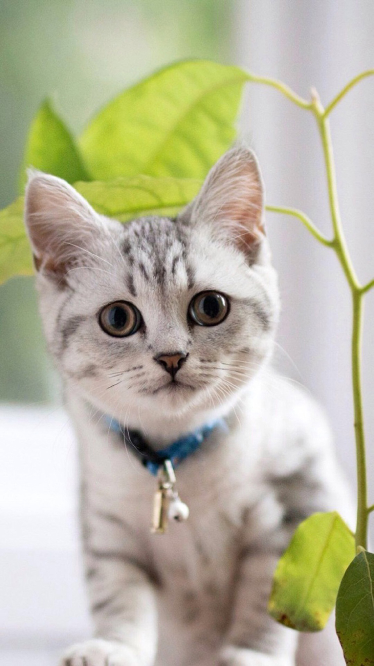 猫咪 娇小 可爱 动物