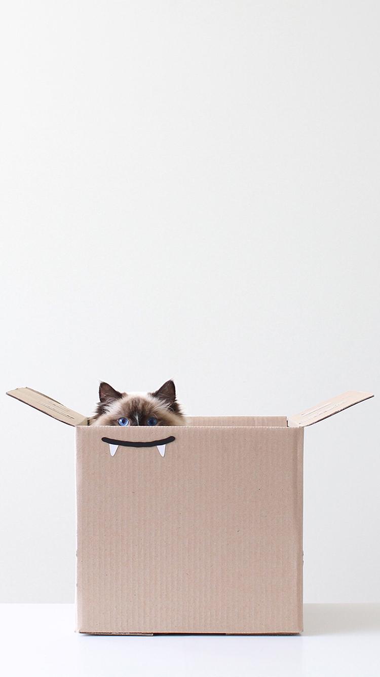 猫咪 动物 纸箱 创意