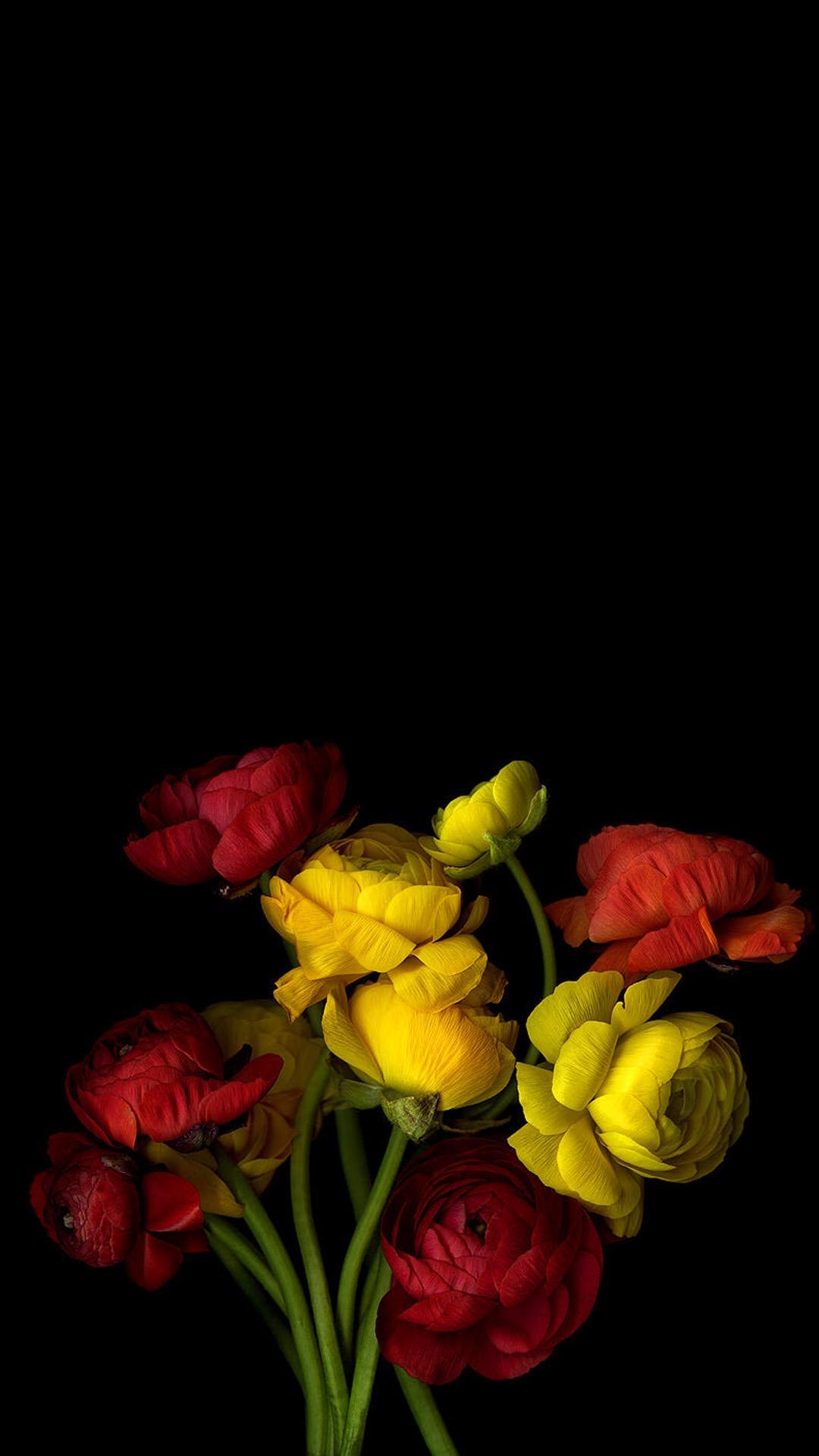 彩色 金魚 水族 蘋果手機高清壁紙 1080x1920 - 錢柜