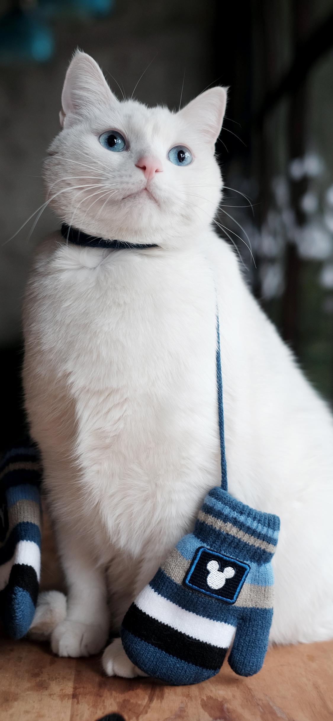 白猫 猫咪 可爱 萌宠 喵星人
