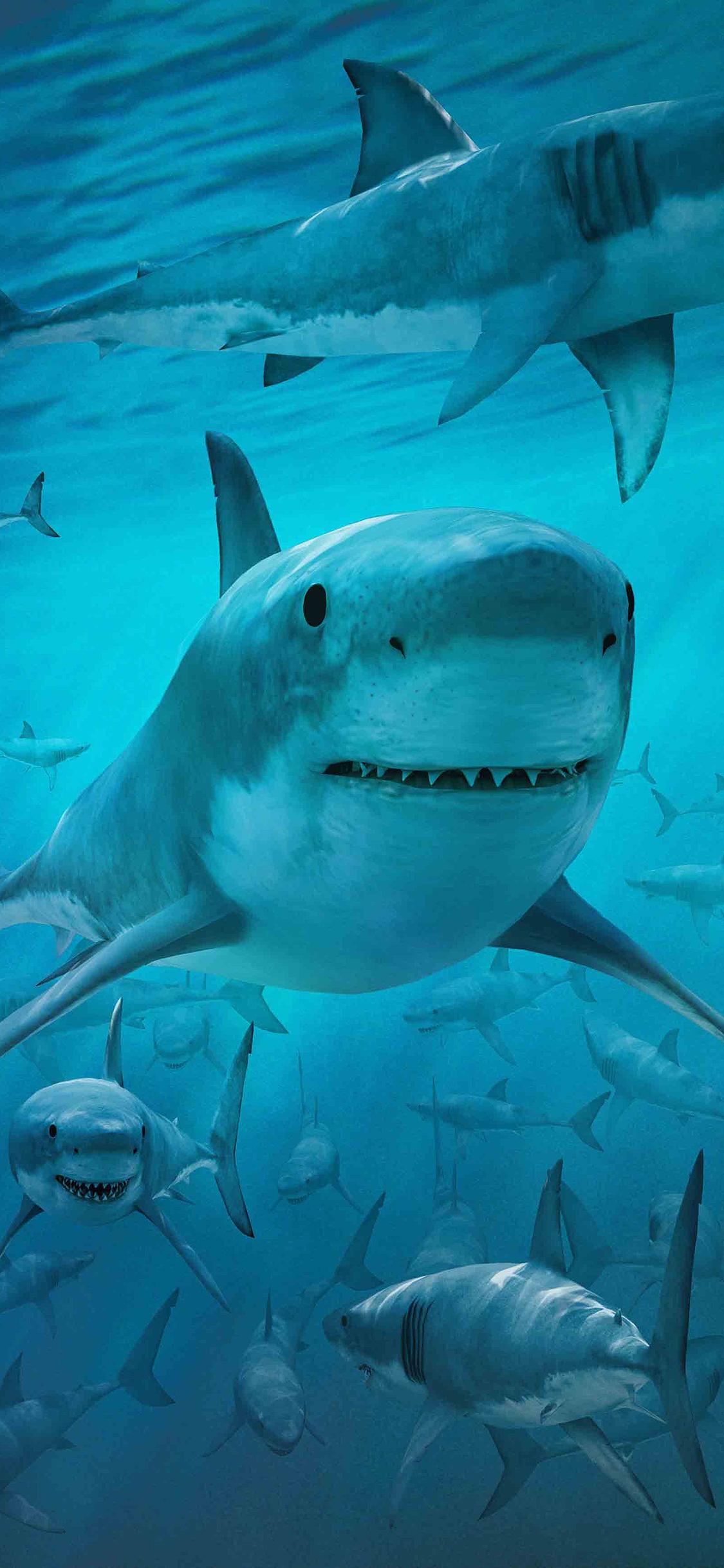 海底魚類 海底世界 海底動物 魚群 石頭 海底圖片 魚類 生物世界 海底圖片