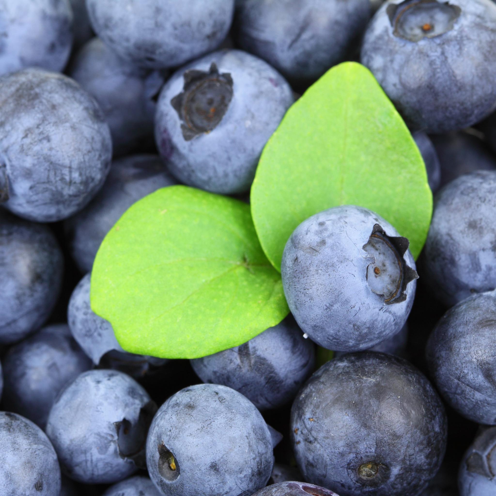 蓝莓 水果 新鲜 叶子