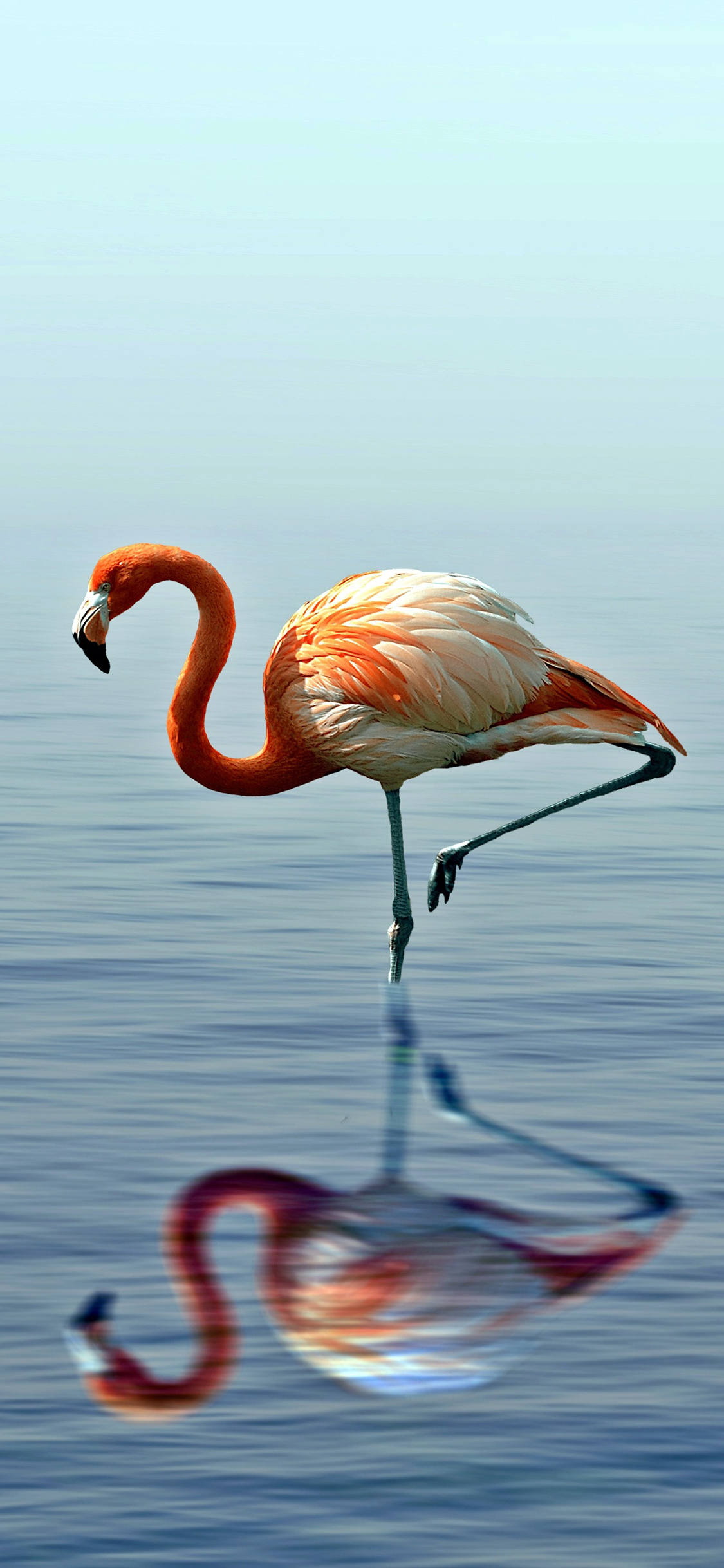 壁纸 动物 鸟 鸟类 摄影 桌面 1125_2436 竖版 竖屏 手机