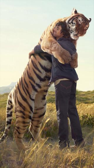 拥抱 老虎 猛兽 动物
