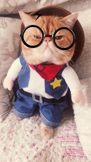 可爱 猫咪 喵星人 萌宠