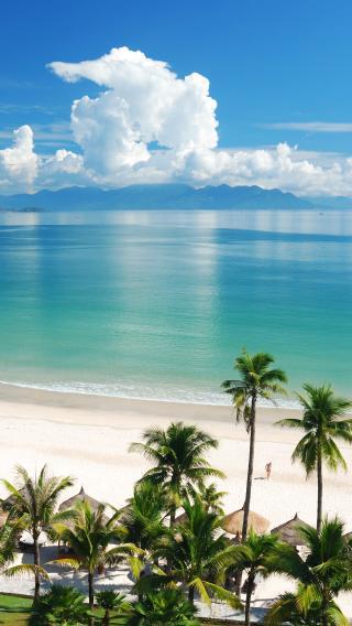 海滩 椰树 碧海云天
