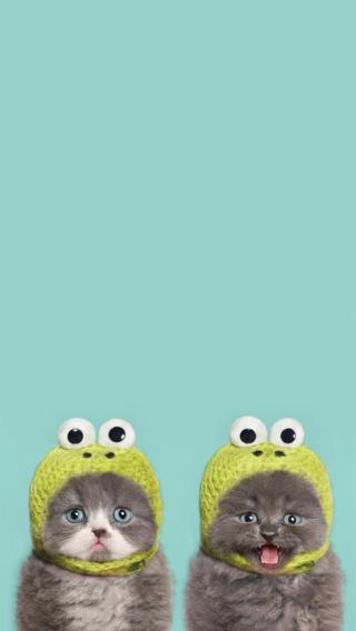 猫咪 可爱 青蛙帽子 喵星人