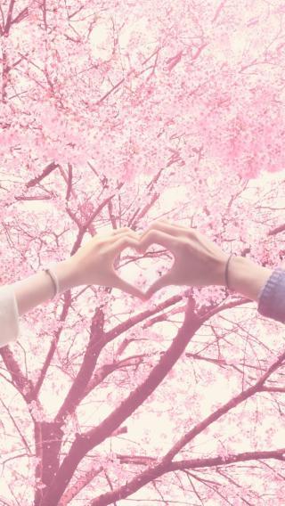 花 唯美 粉色  爱心