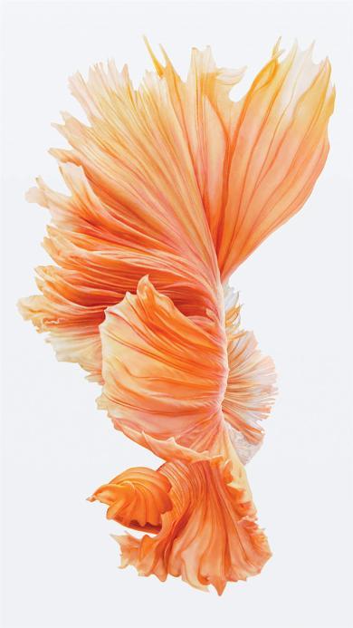 苹果IOS10官方内置壁纸 鱼 尾巴 橘色