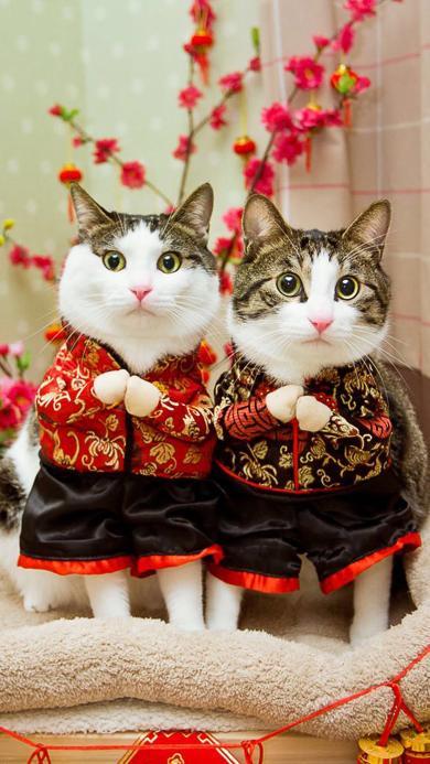 猫咪 拜年 春节 新年