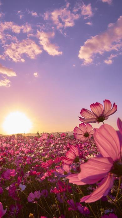 鲜花 或多 红花 阳光 蓝天