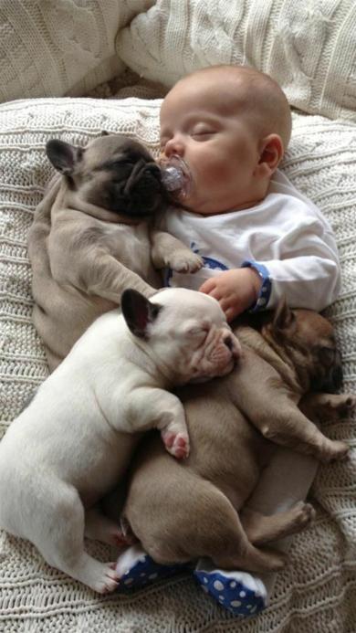 小狗 萌娃 睡觉 可爱