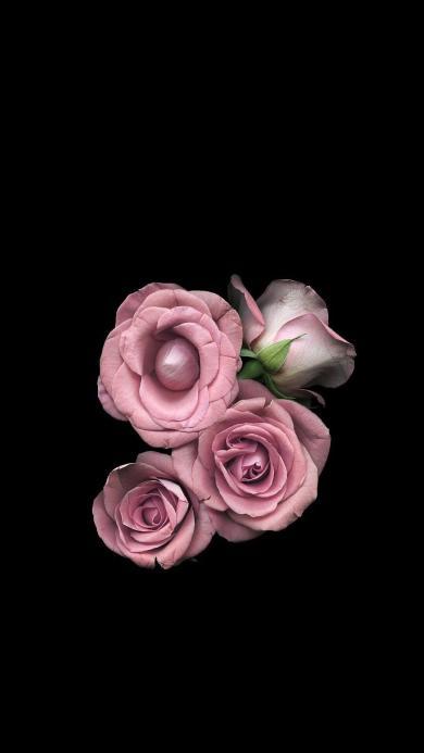 鲜花 粉色 黑色 盛开 绽放