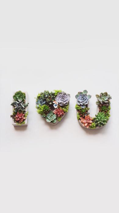 多肉 植物 盆栽i love you 爱情