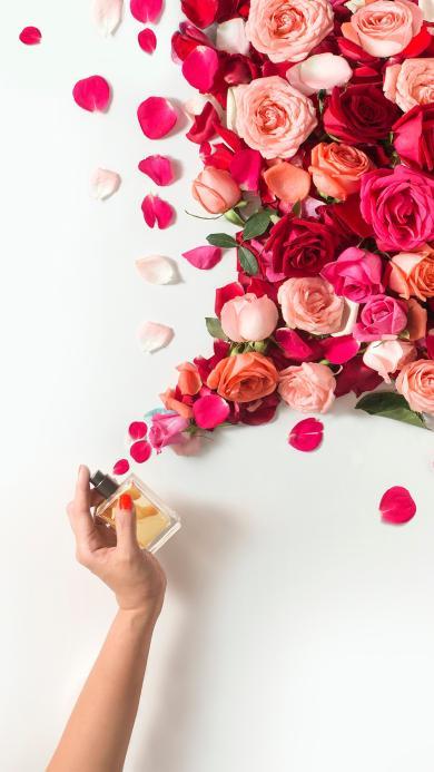 鲜花 玫瑰 红色 香水 时尚
