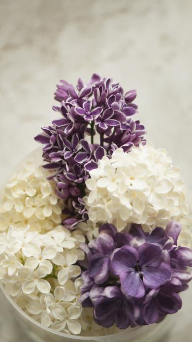 鲜花 紫色 白色 花球浪漫