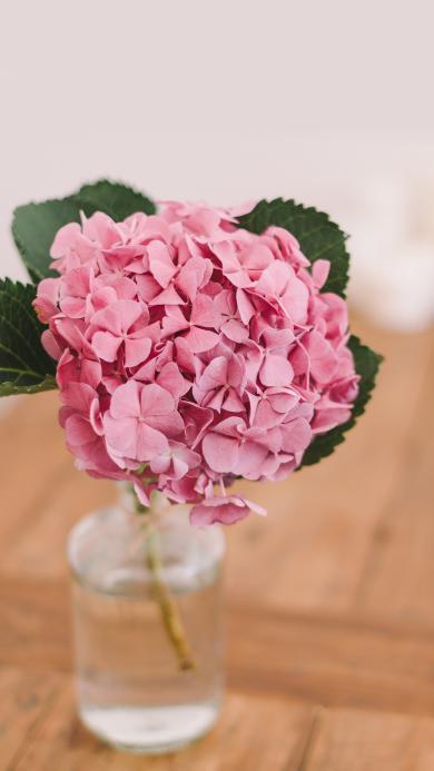 花球 鲜花 粉色 水培 盆栽 浪漫