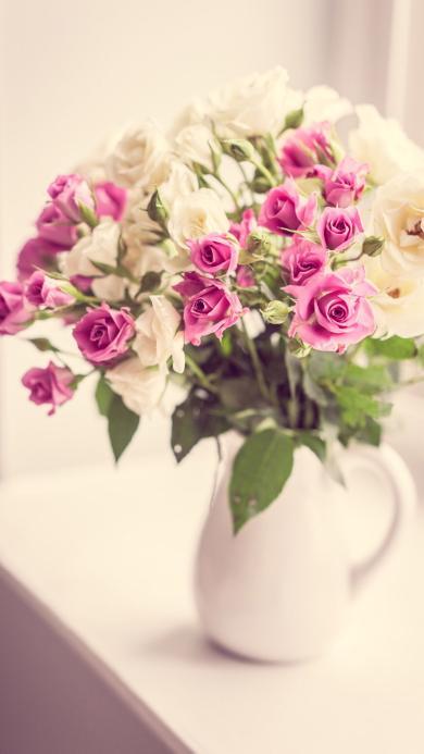 玫瑰 鲜花 粉色 浪漫 唯美