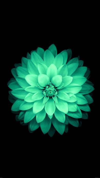 花朵 艺术 其他 黑色