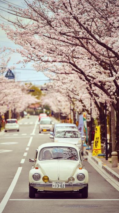 樱花 日本 道路 汽车 复古车 浪漫