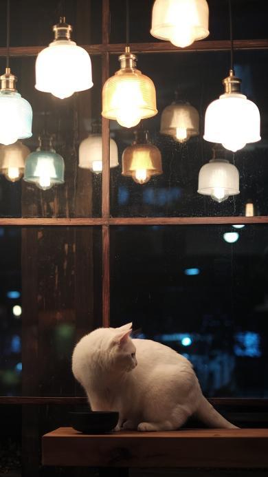 猫 喵星人 萌宠 吊灯 光 玻璃窗