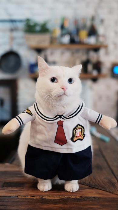 喵星人 猫咪 白色 萌宠 可爱 水手服