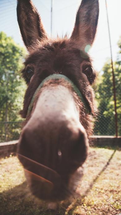 驴 驴脸 大头 动物