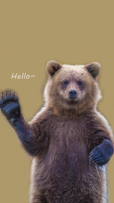 狗熊 Hello 招手 熊掌 问好 搞怪 可爱