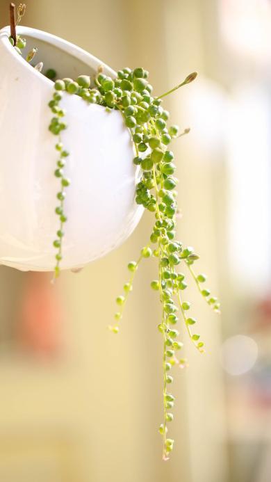 多肉 垂钓 绿色植物 小清新