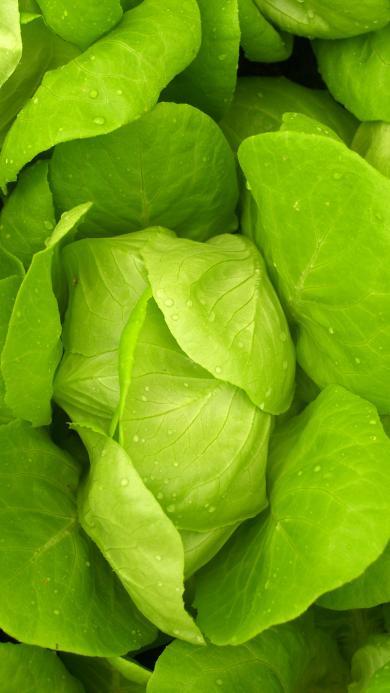 蔬菜 青菜 绿叶 有机健康