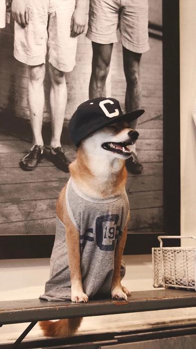 狗狗 宠物 萌宠 汪星人 运动衫 帽子