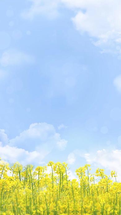油菜花 蔬菜 天空 蓝天白云 唯美