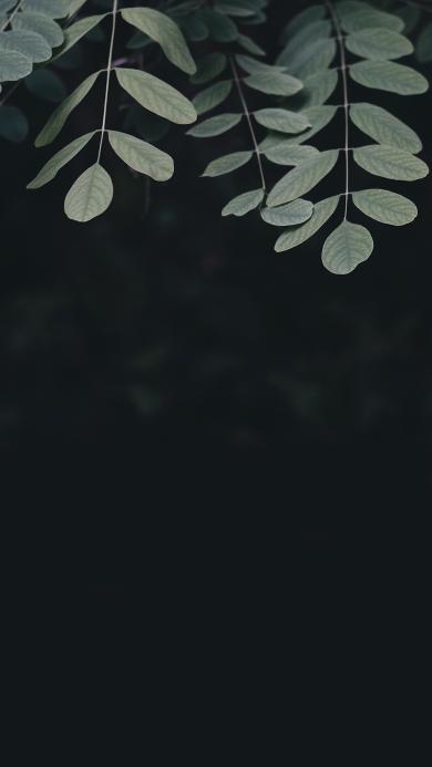 绿叶 植物 树叶 特写