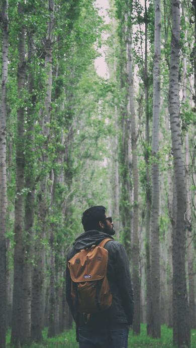 背影 远足 自然 森林