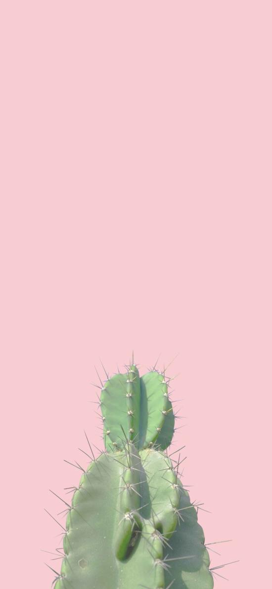 仙人掌  粉色 热带 绿化 刺