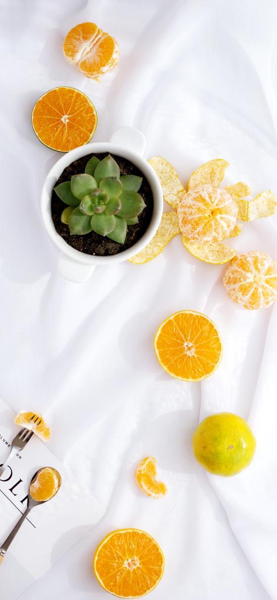 水果 橘 杂志 柑橘 多肉  盆栽