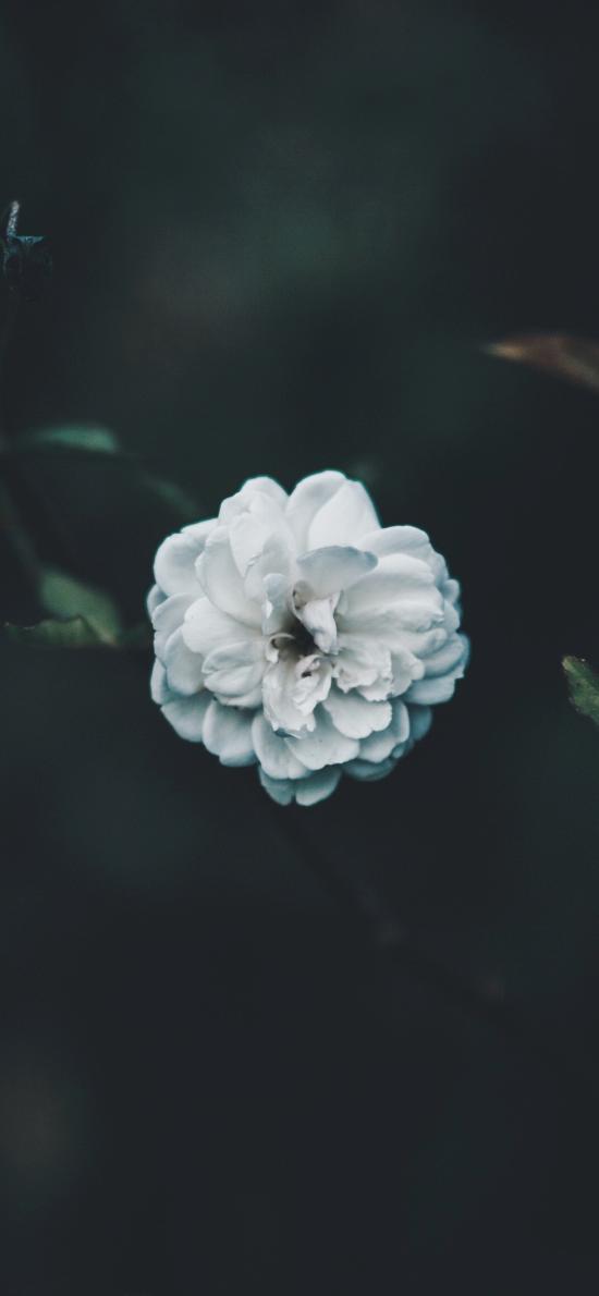 小花 鲜花 枝叶 花瓣