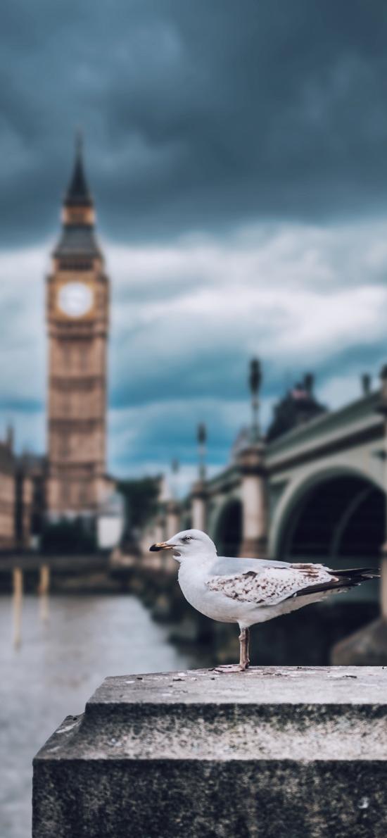 英国 建筑 银鸥鸟 海鸟