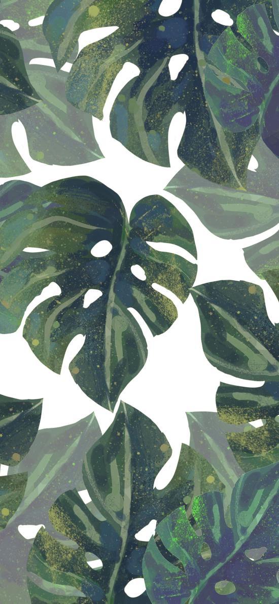 龟背竹 绿色 插画 平铺 叶子