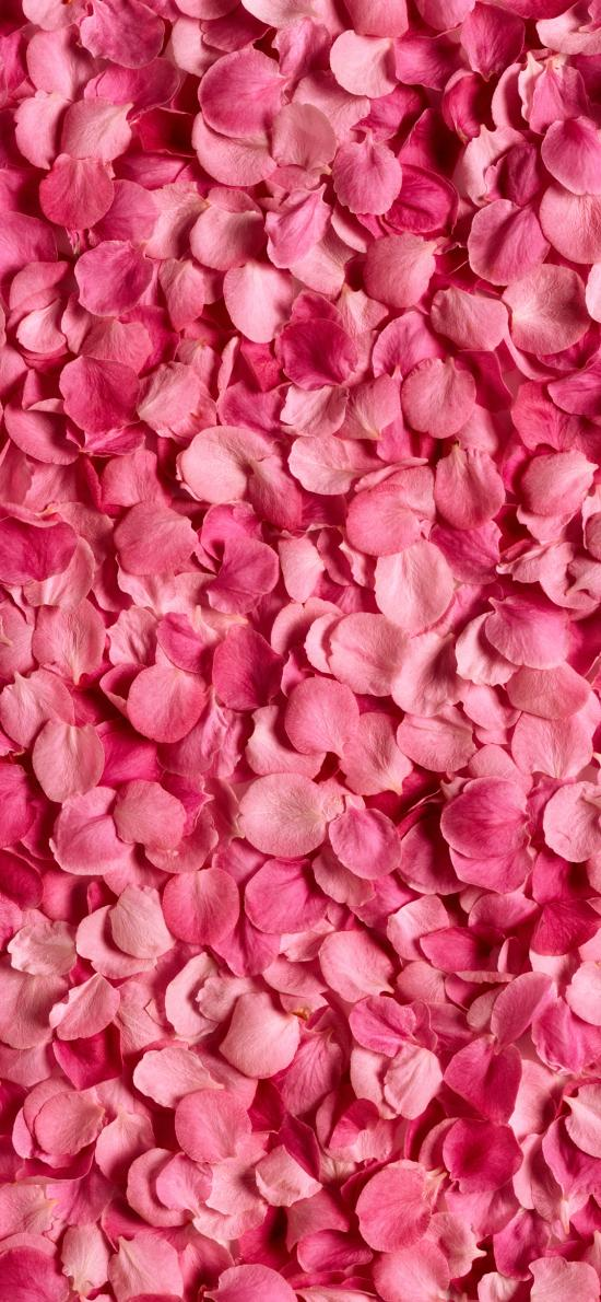 花瓣 粉色 浪漫 唯美