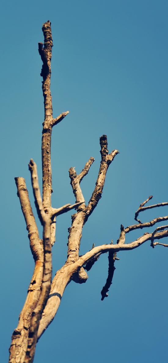 树干 枯木 蓝天 树木