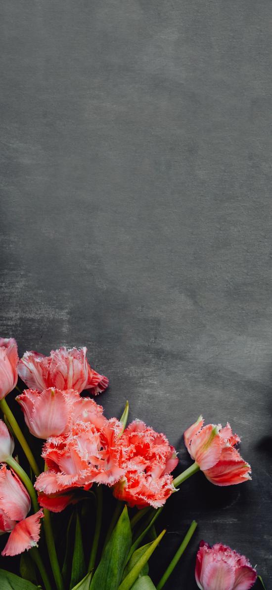 鲜花 枝叶 浪漫 粉色