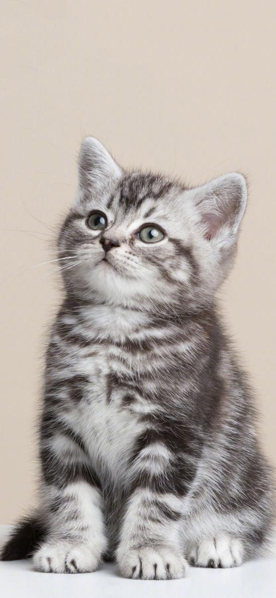 貓咪 喵星人 寵物 可愛 萌