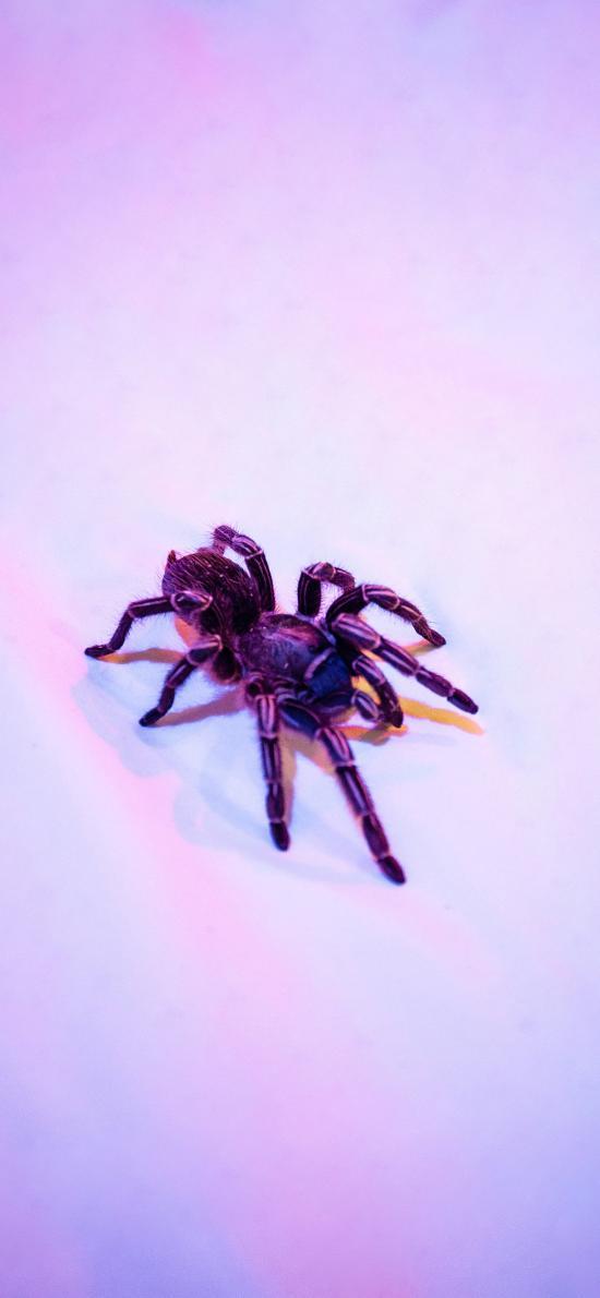 蜘蛛 節肢動物 昆蟲 觸角