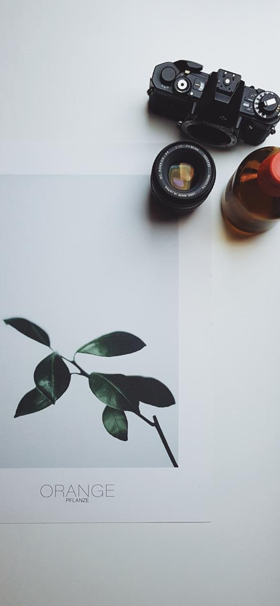 靜物 鏡頭 枝葉 攝像