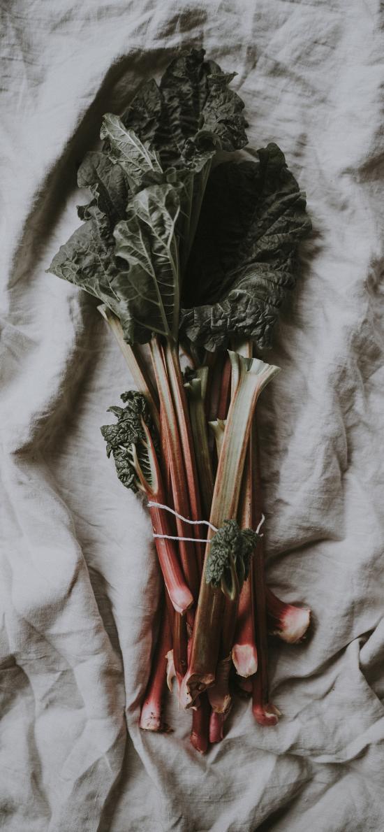 菜梗 食材 綠植 蔬菜