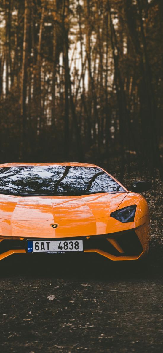 跑車 樹林 蘭博基尼 橘色